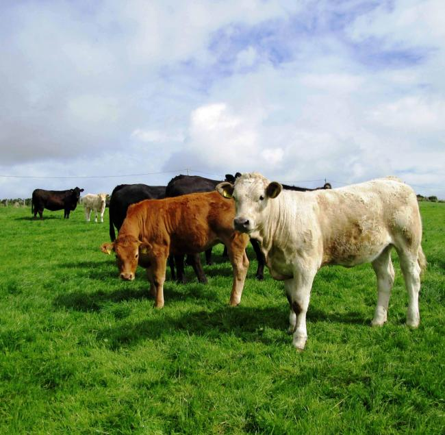 Project aims to promote cattle EID