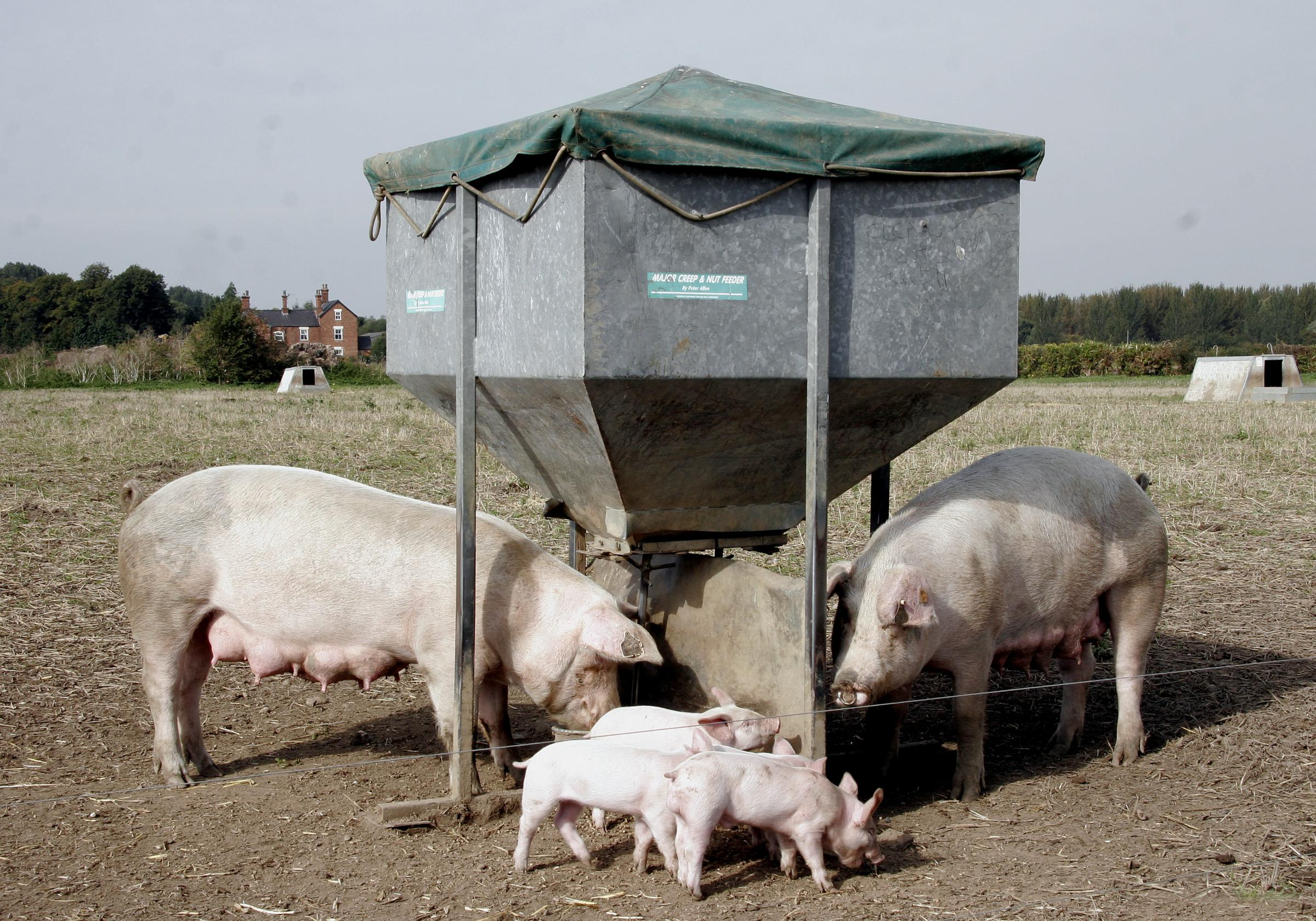 nedap centre tag page prairie swine each feeder pig