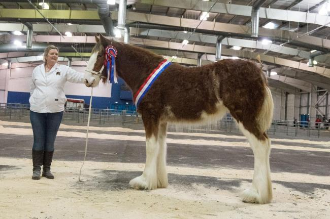 Eric and Miranda Johnstone's Ord Tinkerbell stood supreme champion