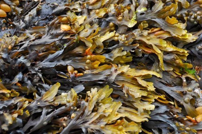 """We are starting to see growth in seaweed as a commercial product, used in a huge range of items including food, cosmetics and fertilisers."""