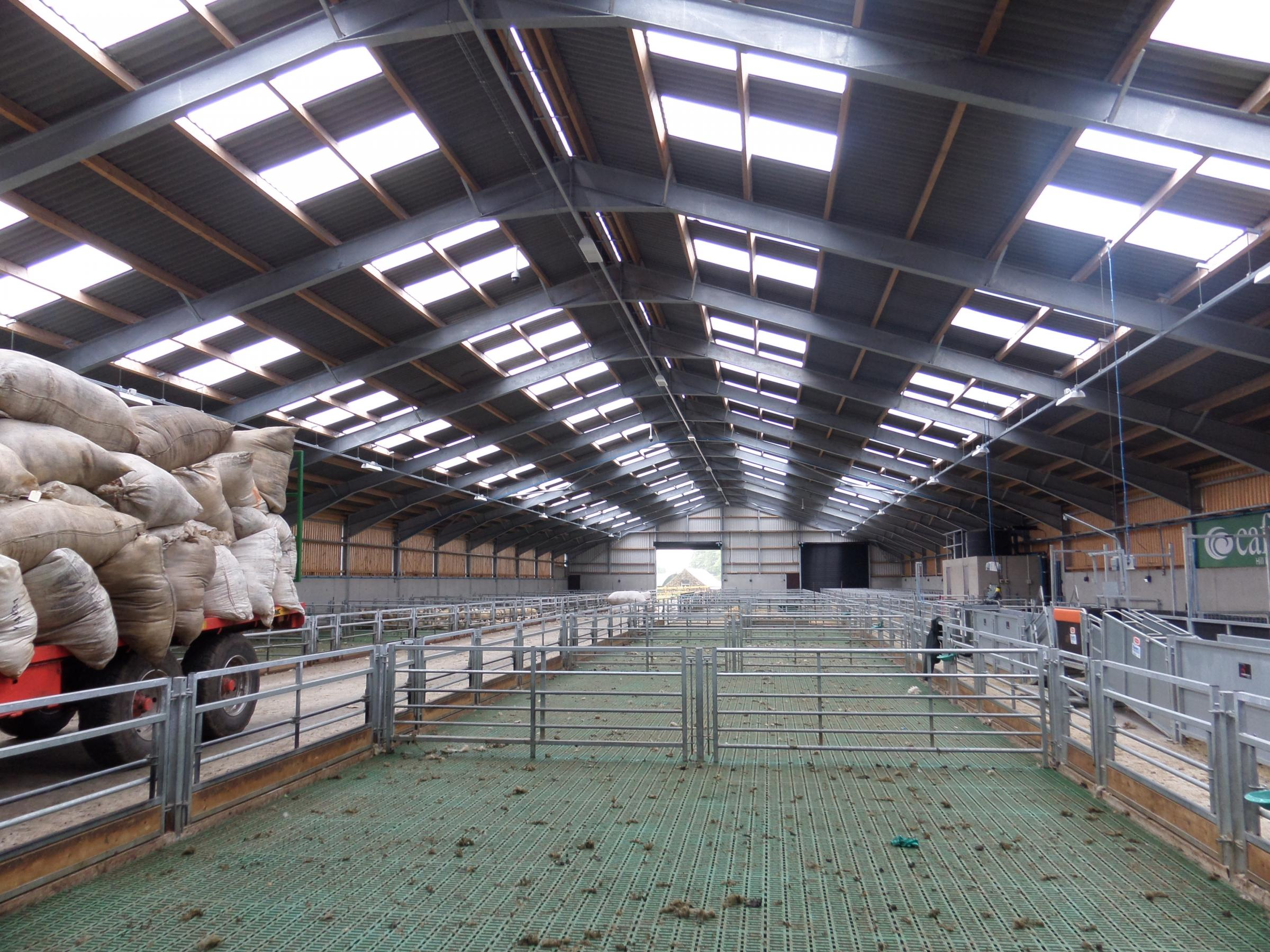 The new and improved shed can house 750 ewes at one time and includes handling facilities for the entire 1100 flock