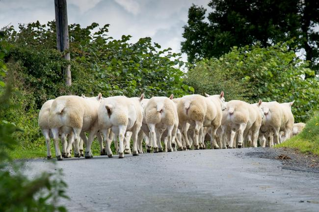 d71152ed All roads will lead to Kelso on Friday... | The Scottish Farmer