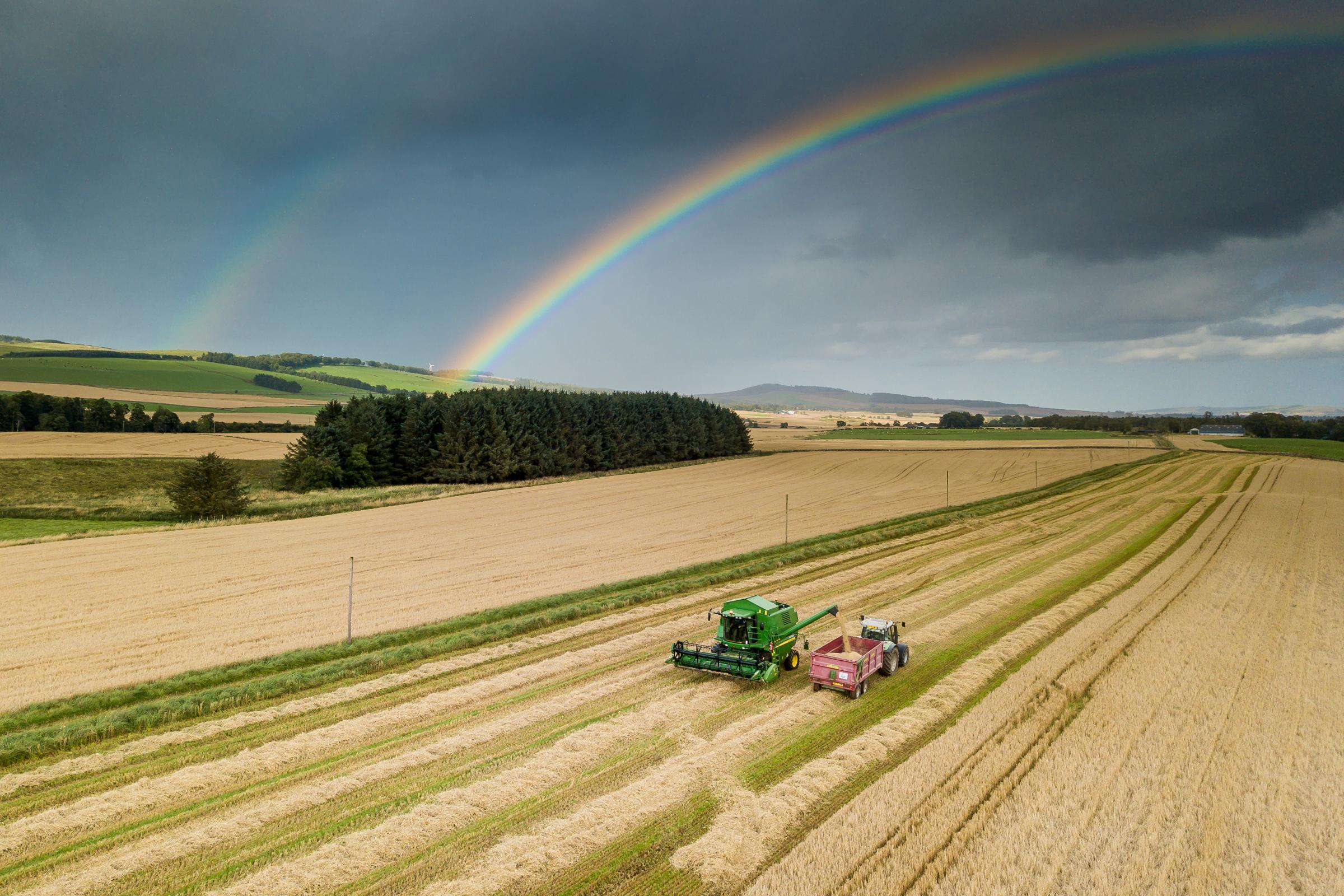 RAINBOW HARVEST driving this combine at Shandford, Brechin is Ally Mather, with Grant Mather carting off (Pic: Ian McLachlan)