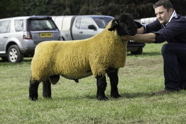 Suffolk lamb leads at breeds at Kelso at £4800 | The