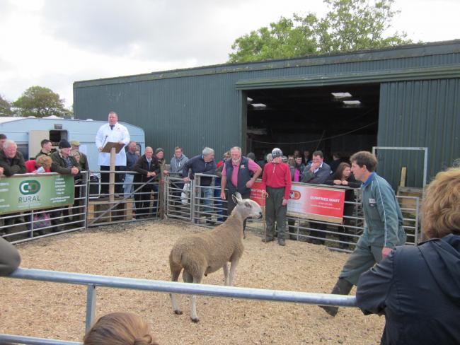 Buoyant trade at Kintyre sheep sale | The Scottish Farmer