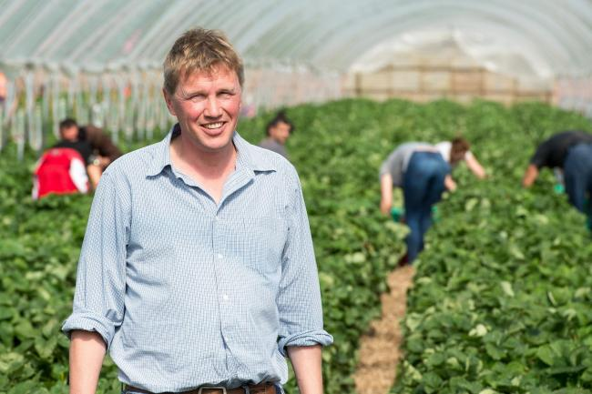 How best to give a carrot to veg producers? | The Scottish Farmer