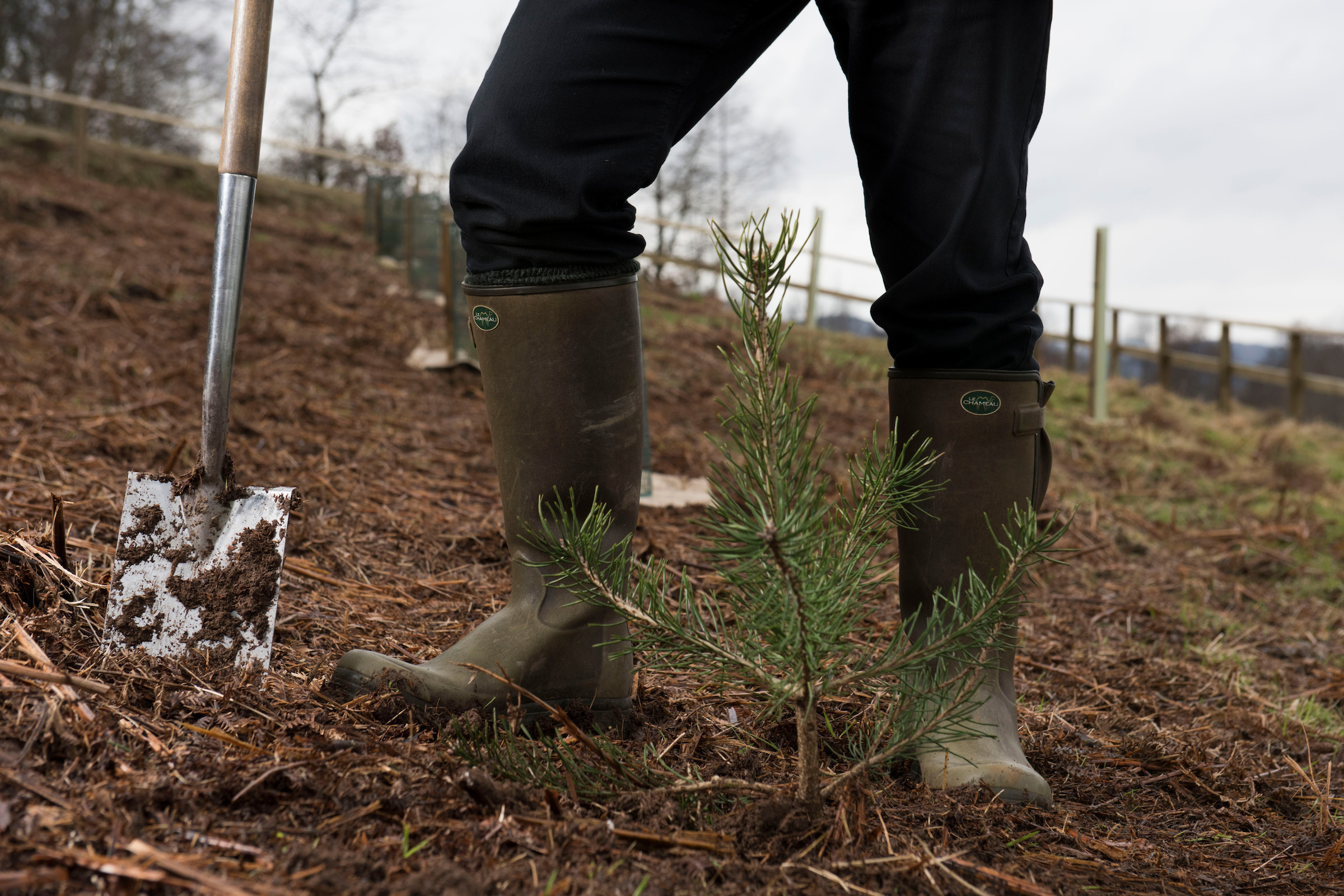 Planting trees has moved up the political agenda