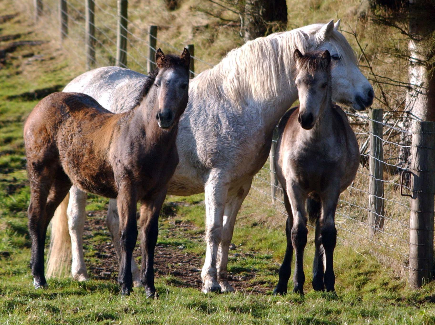 How to Care for a Pregnant Mare How to Care for a Pregnant Mare new pictures