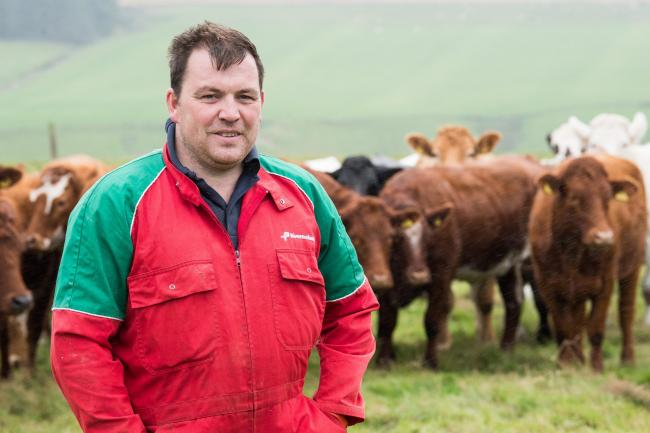 Graeme Mather plus some of the Simmental cross Shorthorn heifers in the background  Ref:RH28817760