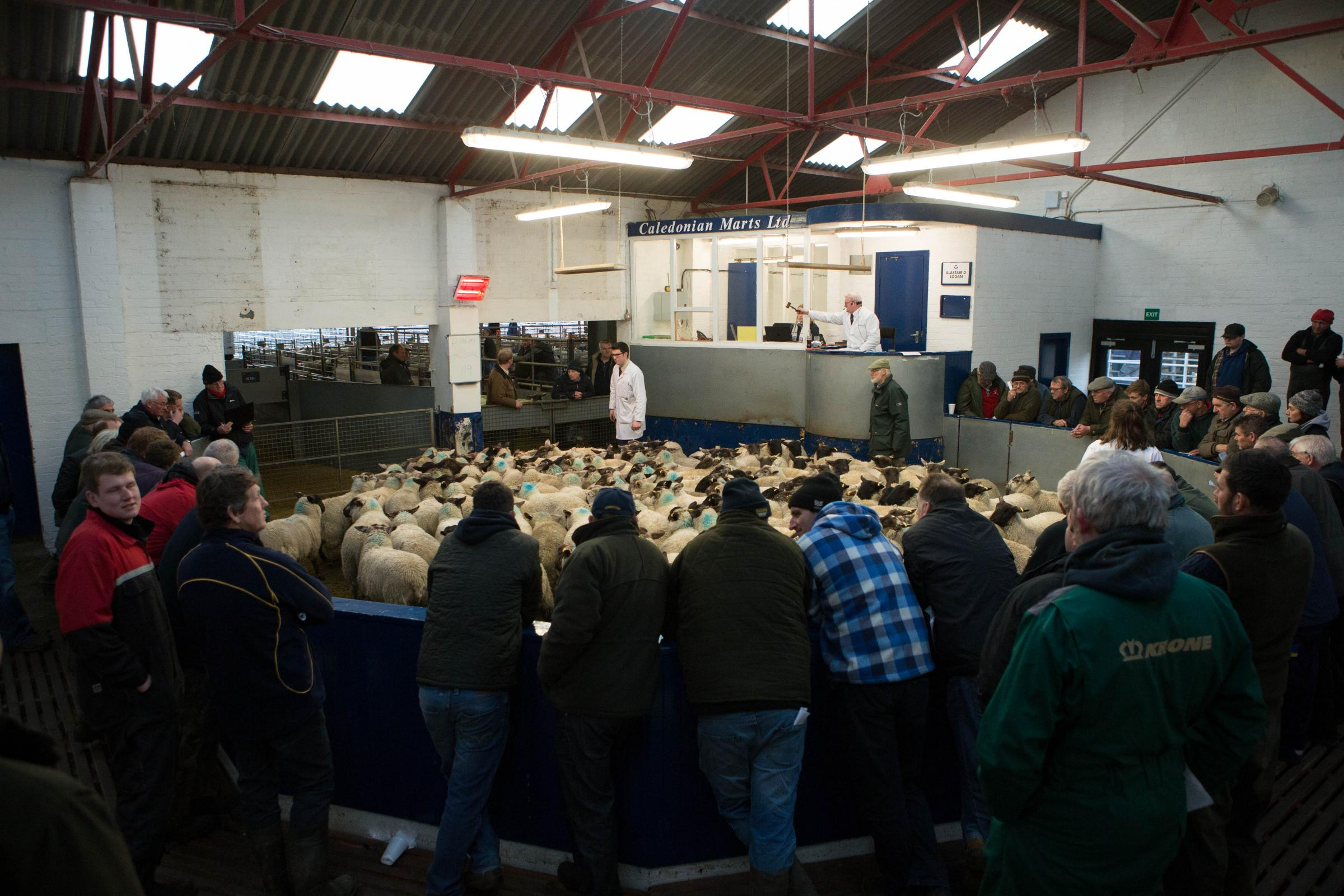 A large ringside of buyers from across the UK witnessed the champion pen from Lurgan top the sale at £95 apiece