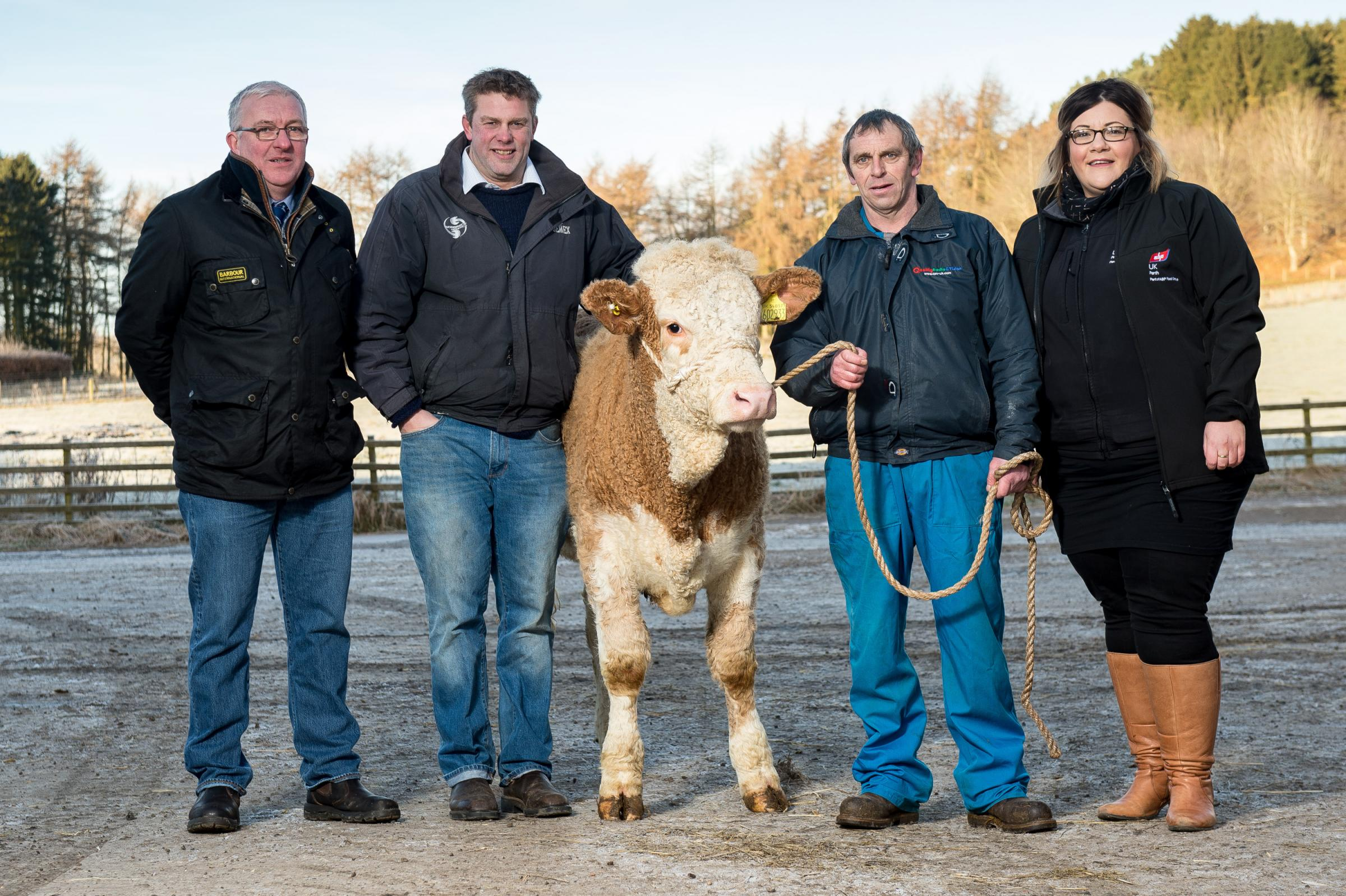 Neil Shand, chief executive of the Simmental Cattle Society far left to right; Adrian Ivory; Colin Fordyce, and Carlene Mackay, with the heifer Strathisla Ingrid's Geraldine which will be auctioned off to raise funds for the James Fordyce Fund