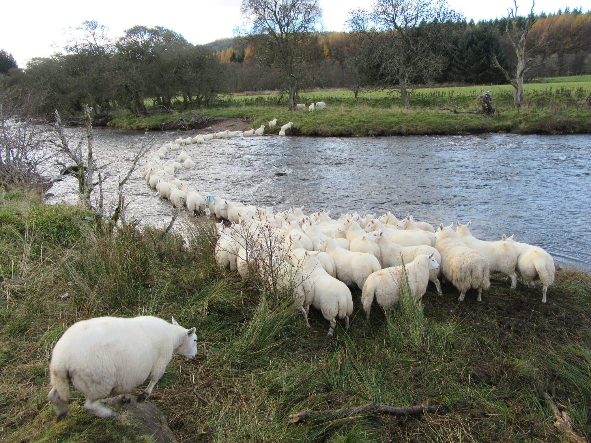 Many rivers to cross... 2017 was a challenging year for Scotland's farming industry