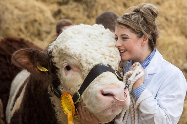The Scottish Farmer: Louise Allan snuggling into Kilbride Farm Gregor which sold for 10,000gns at the Stirling Bull Sales