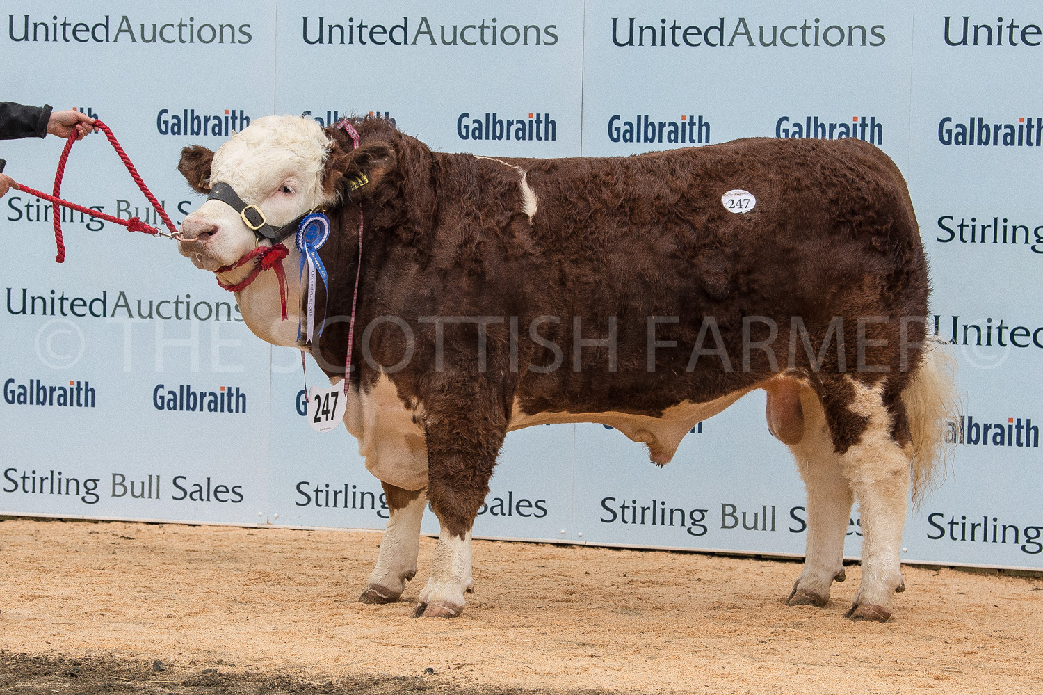 Islavale Heston topped the sale at 24,000gns for the Stronachs
