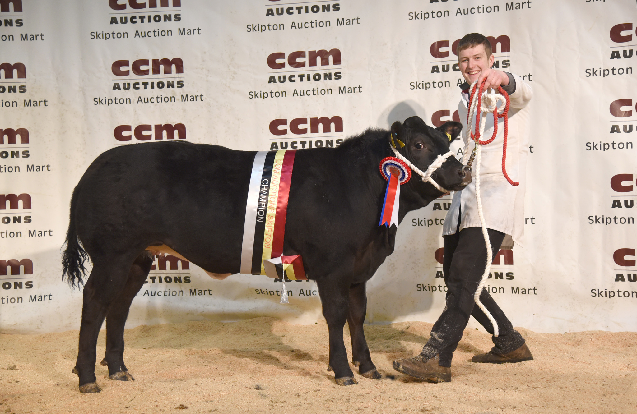 British Blue Heifer and supreme champion from JC Walker and Son.