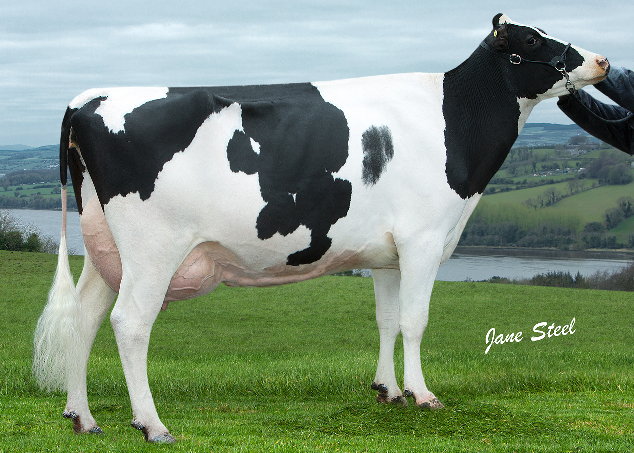 A daughter of Prehen Lancaster, Prehen Shamrock Lady