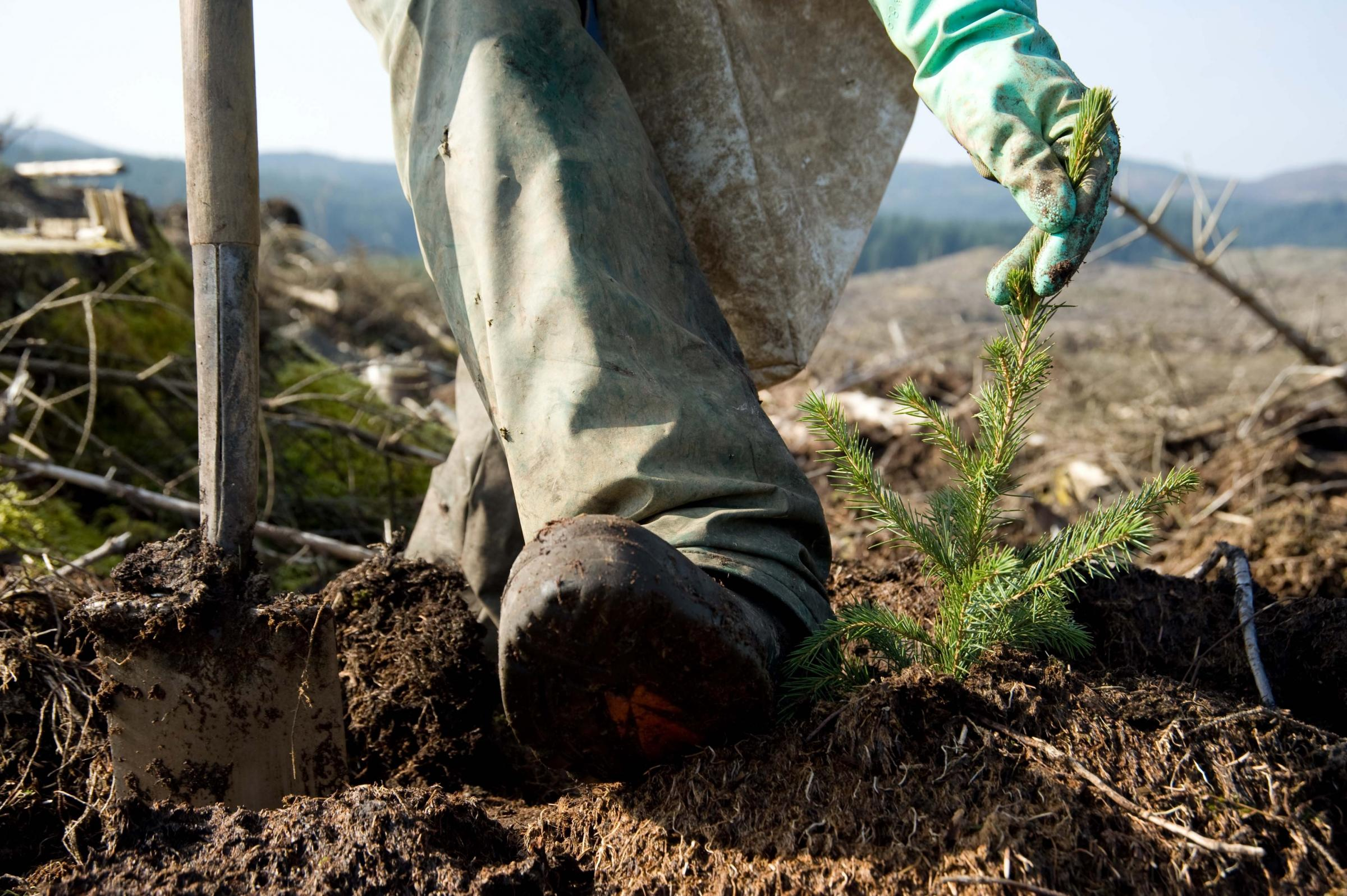 Scottish tree planting is outstripping the rest of the UK