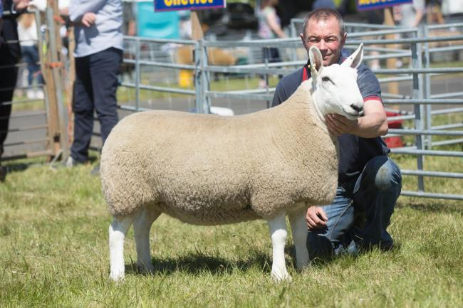Steven Turnbull, sheep farmer and sales and product manager at Davidsons Animal Feeds  Ref:EC306183296