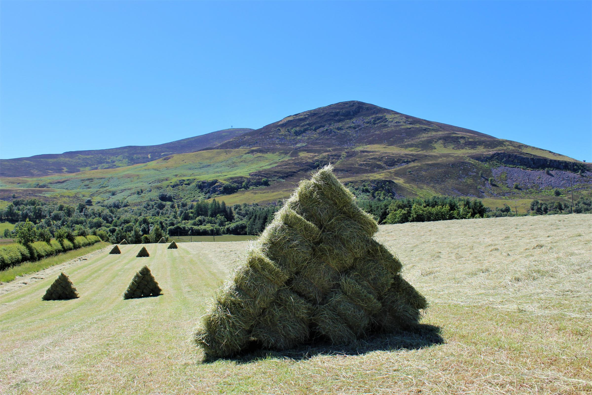 FOR THE first time in a very long time, hay was being made in Glenisla, Perthshire this week
