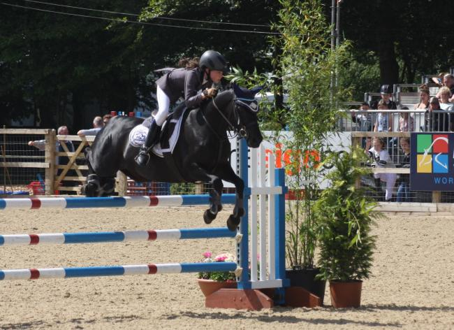 Bred for the show ring, this quality pony is taking on the show jumpers at their own game