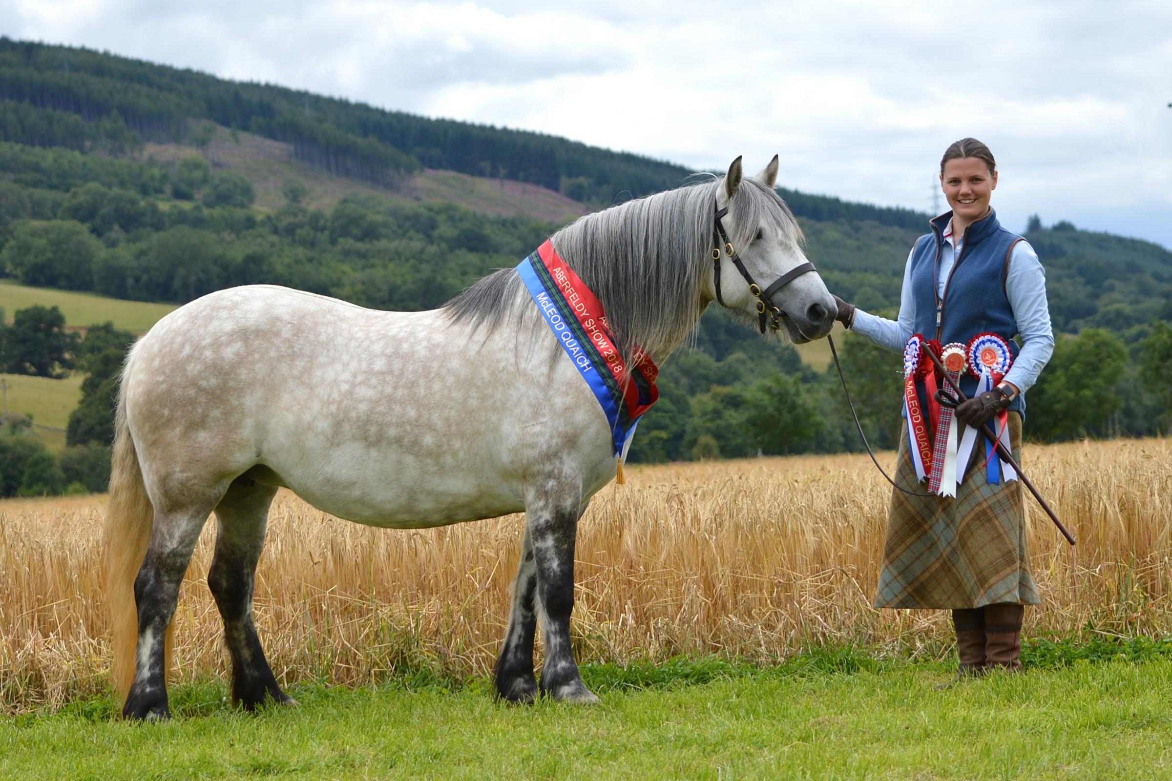 Overall Highland pony champion at Aberfeldy Show was Sally Murray's Lurgan Tay Mhor, shown by Kenna Murdoch      Ref:KK110818485