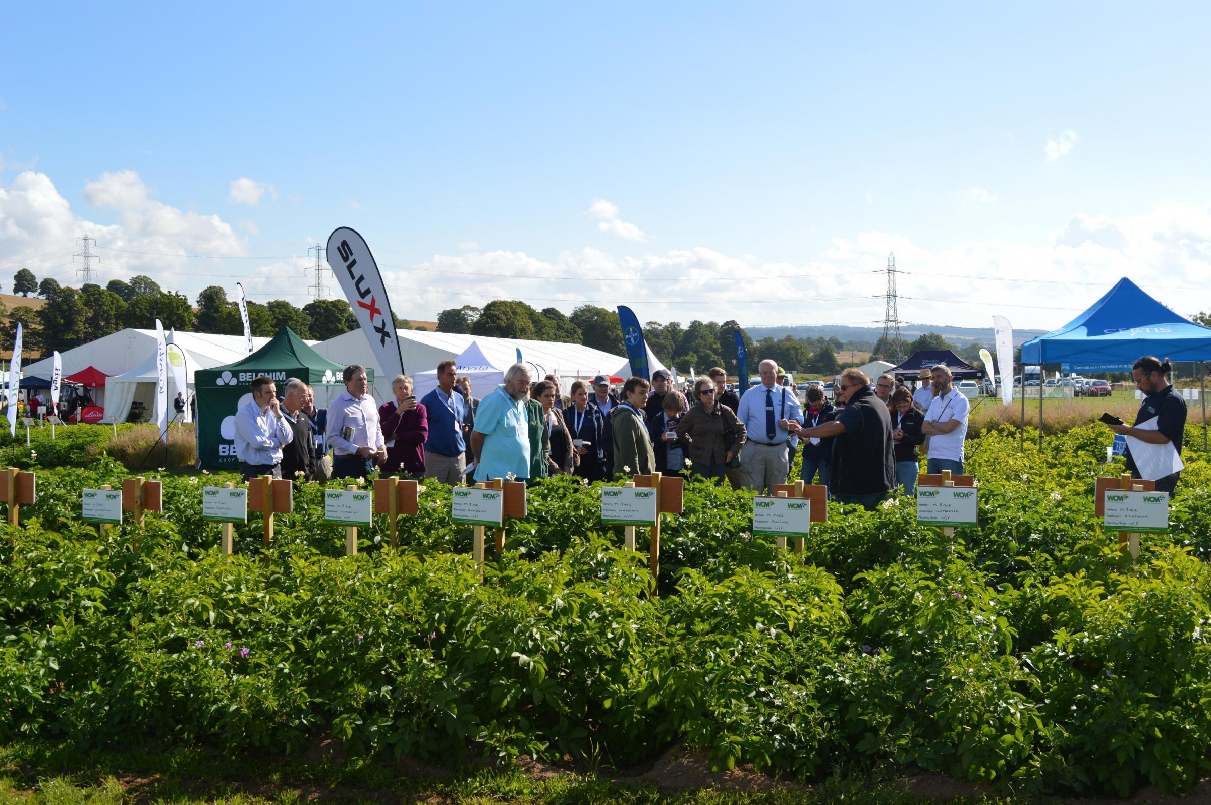 A good day to view the demo plots at Potatoes in Practice, recently