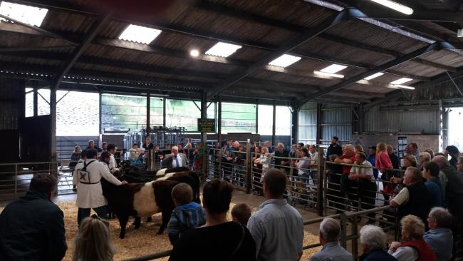 A busy and successful first stockjudging competition for the Scottish Belted Galloway Club