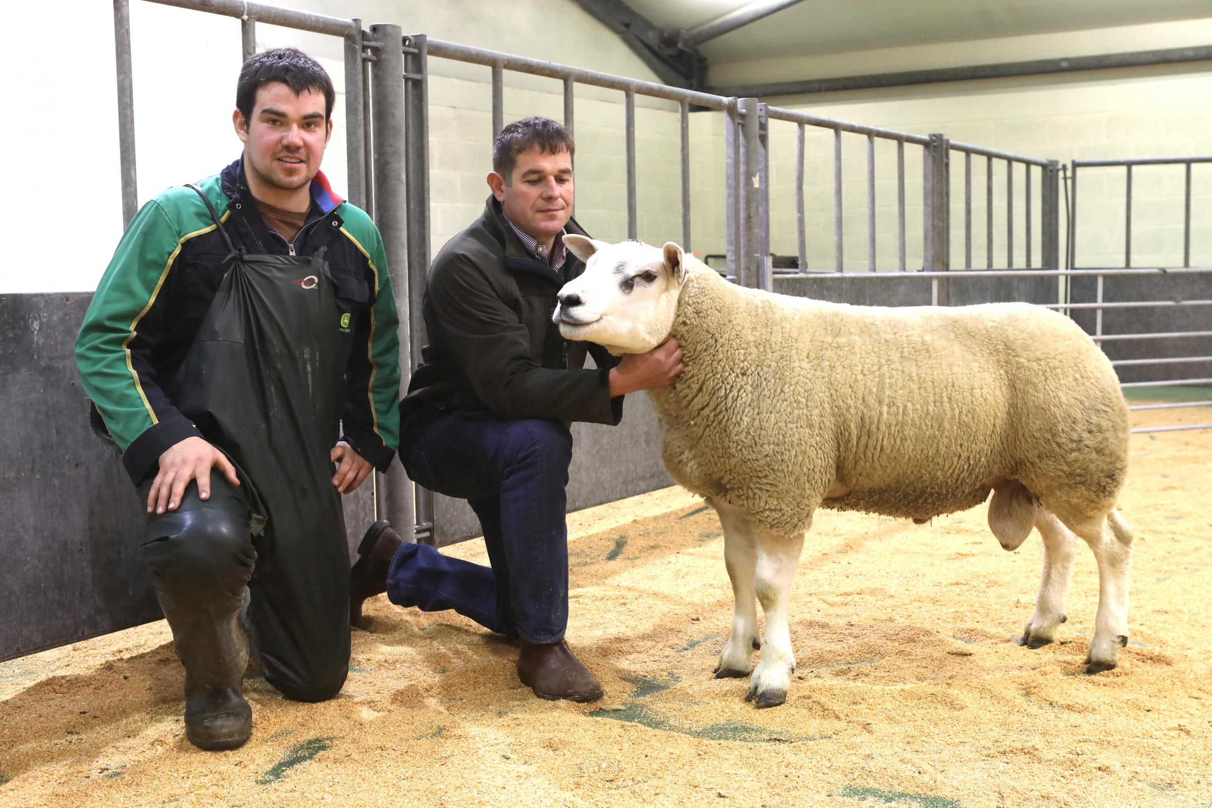 This Texel shearling from Veltigar, Tankerness, sold for a new centre record price of £2200 to Robert and Hazel McNee, Over Finlarg, Tealing, Dundee, at Orkeny Auction Mart