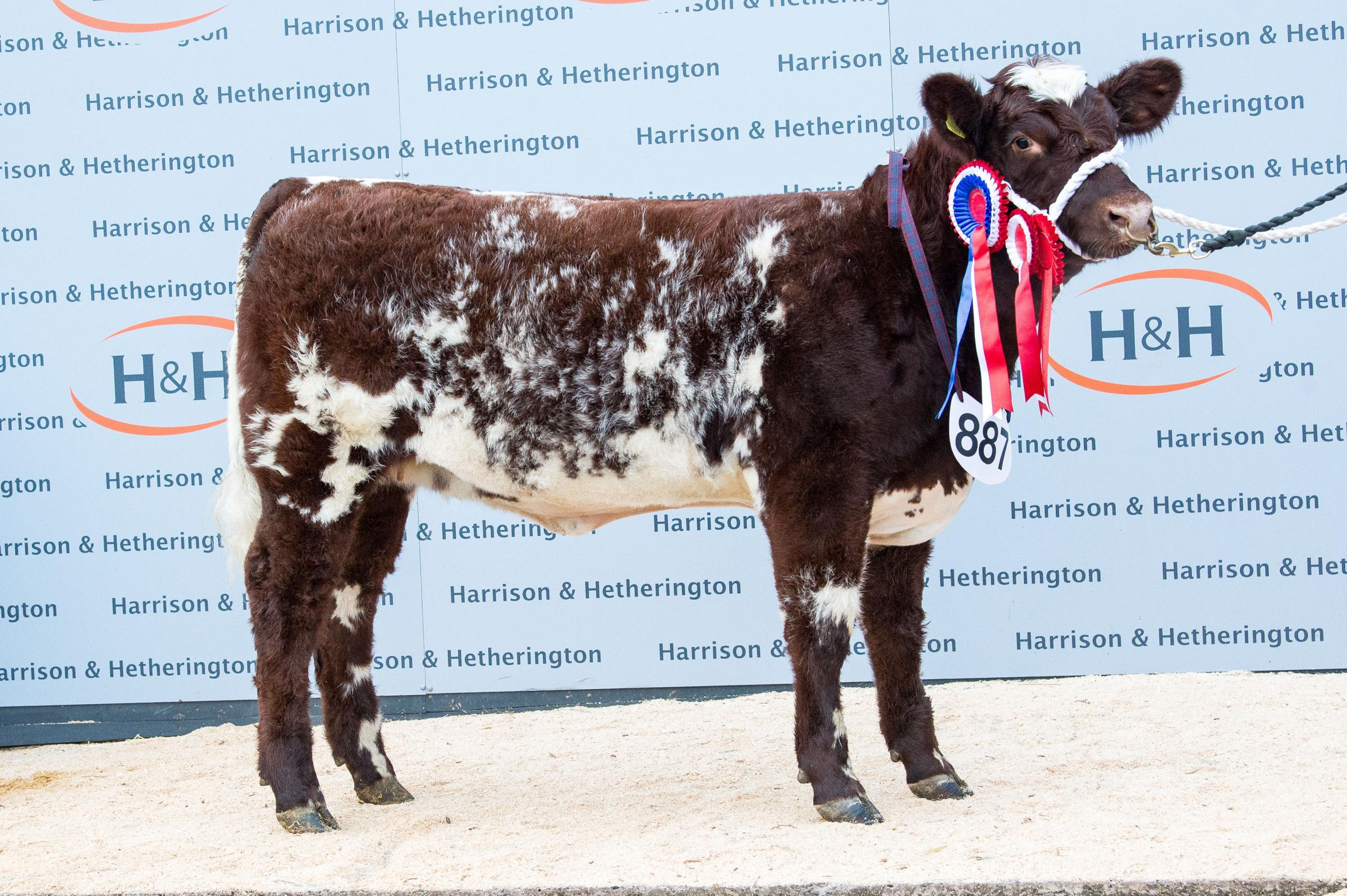 Beef Shorthorn champion was Beautry Shuna Myrtle from the Curries Ref:RH021118091