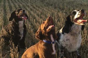 Photo Galleries - Working Dogs (Part 1)