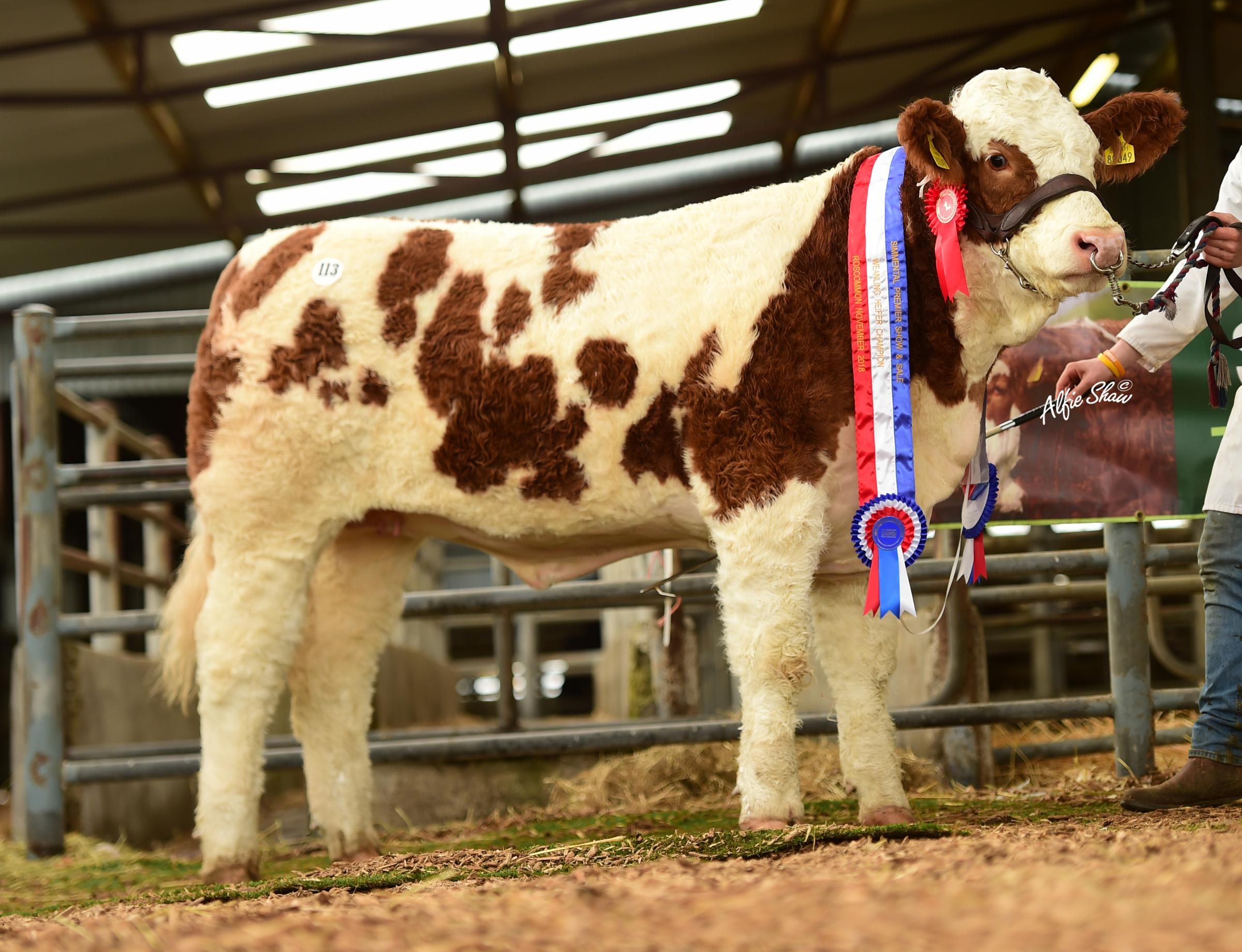 Lissadell Just The One was weaned heifer champion and topped the sale at €9100