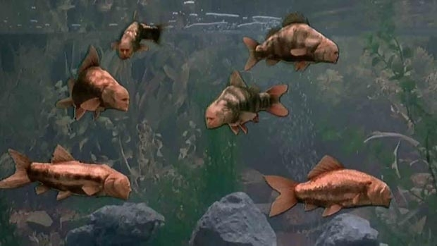 A FISHTANK full of lunatics, as depicted by the Monty Python team in 1983's 'Meaning Of Life'