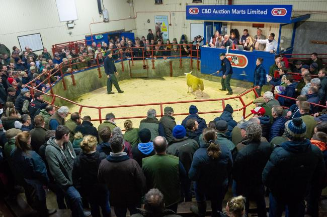 A huge crowd was forward for the Longtown Ladies sale of in-lamb females on Tuesday where Texel gimmers again led the trade at 3400gns with the overall sale average levelling at £761. See page 18 for full report and pictures