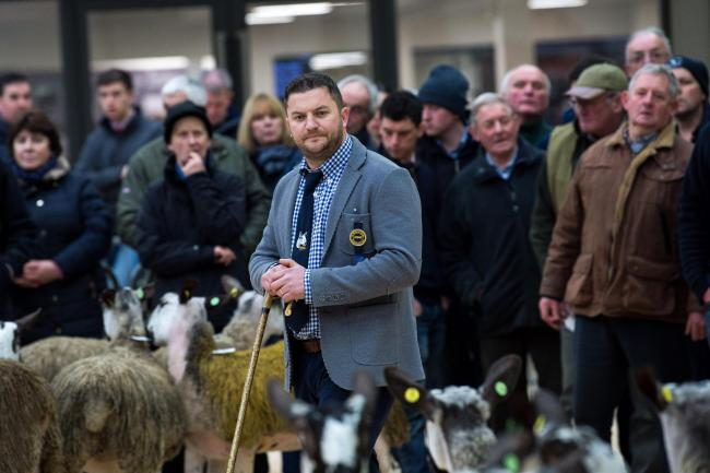 All eyes on  Gary Beacom as he judges  the Bluefaced Leicester Classy Lassies pre sale show at Carlisle  Ref:RH210119014    Rob Haining / The Scottish Farmer.