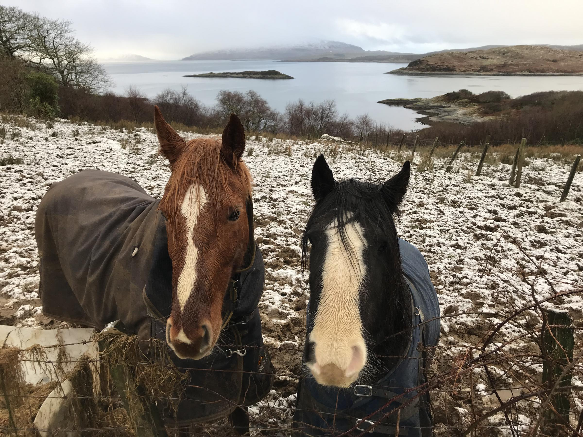 Reader Photos - gallery - from The Scottish Farmer