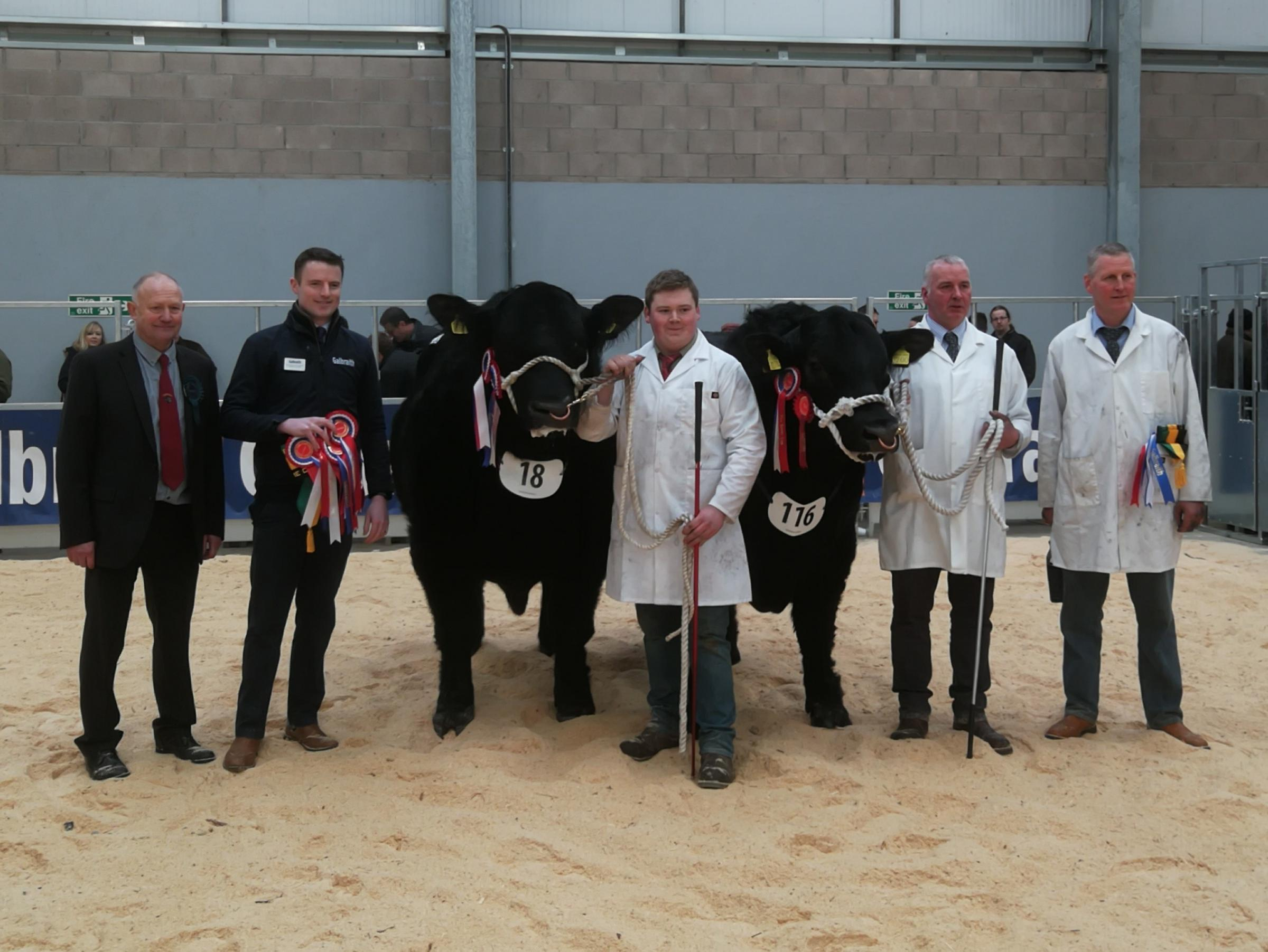 Champion and reserve Angus from left, Glassel Farms' supreme champion, the senior leader, Glassel Jeremy Eric, shown by Ian Lockhead Anderson, and the reserve, the junior champion ws David Stubbs' Logie Defiance shown by stockmen Andrew and James