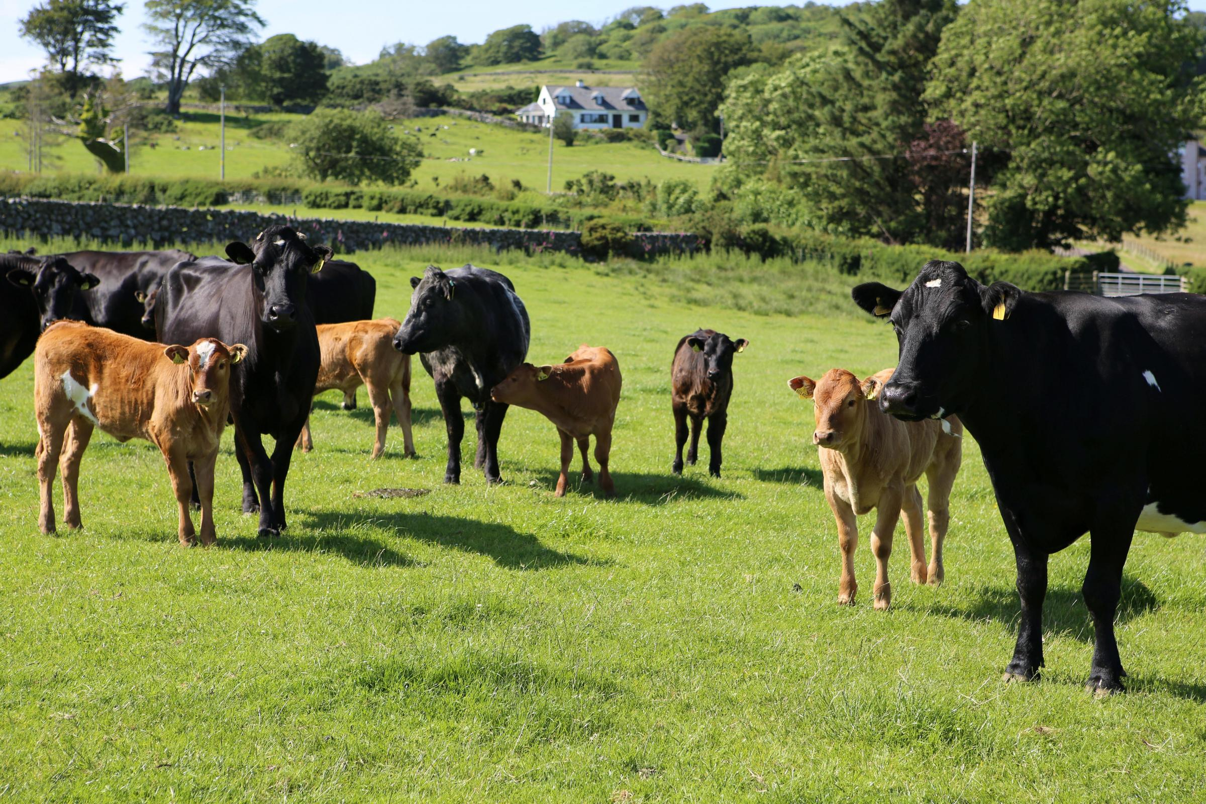 Beef Efficiency Scheme errors cause frustration for Scottish farmer's and crofters