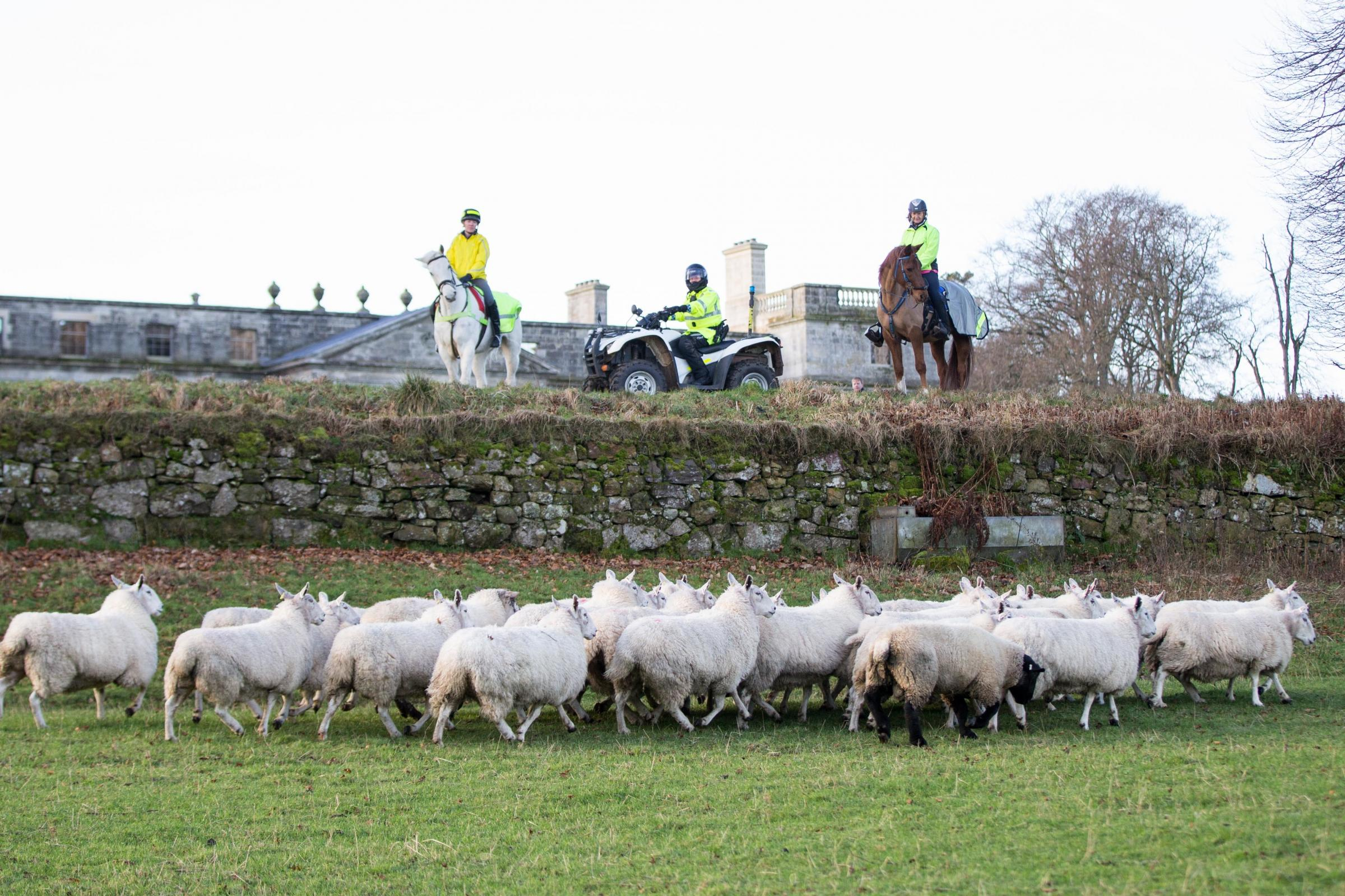 Public consultation for livestock worrying to be launched this February Ref:EC0801194405