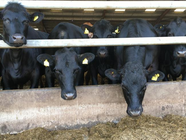 Protecting the Aberdeen-Angus brand is vital