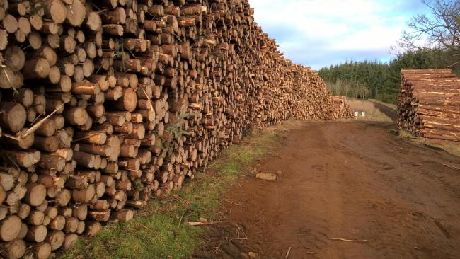 Timber price are on a high