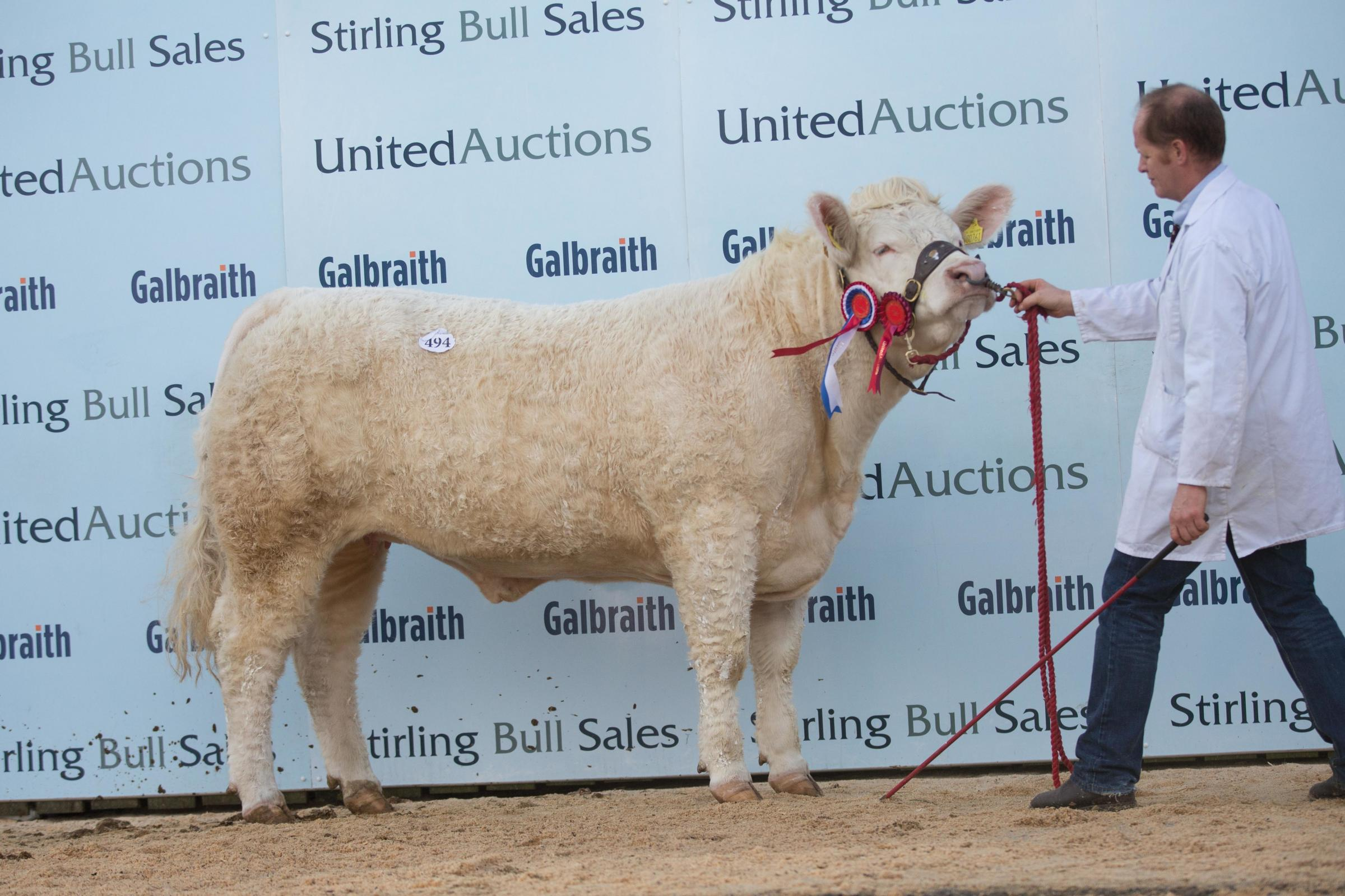 Champion female Goldies Nina from Hamish Goldie sold for 3800gns   Ref:EC1802194661...