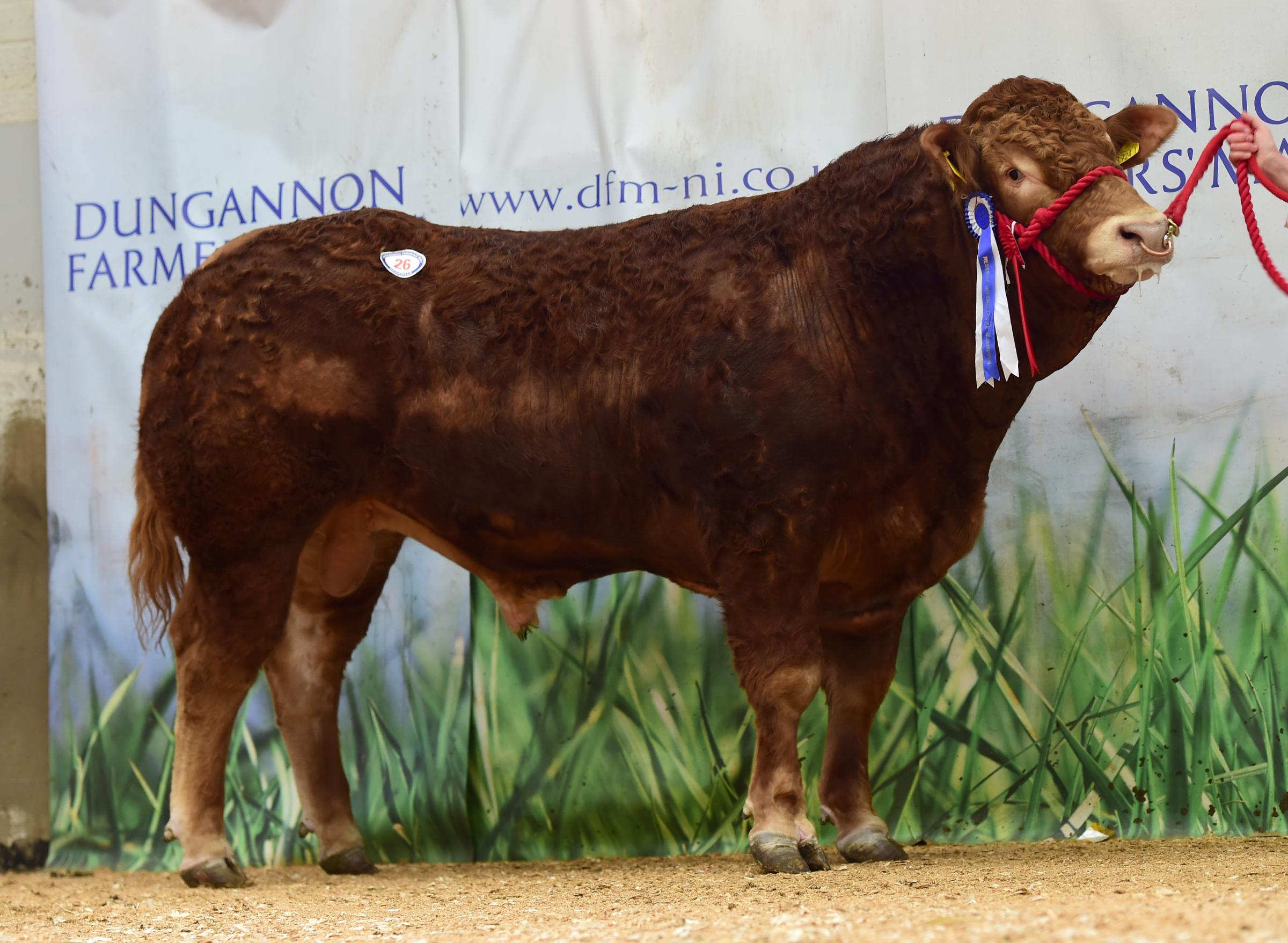 Ballyrobin Norton the reserve intermediate topped the sale at 4500gns