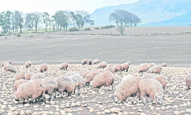 Prime sheep sales have held up well after Easter
