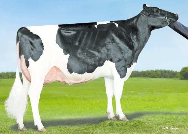 The dam of Denovo Crosby, the new number one £PLI young genomic sire