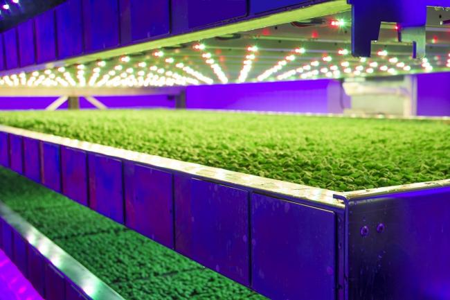 VERTICAL FARMING systems use micro-managed climate and input control to produce vegetable crops indoors
