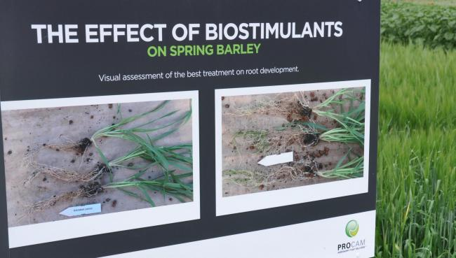 The display clearly shows the rooting effect from fine-tuning micro-nutrients and bio-stimulants