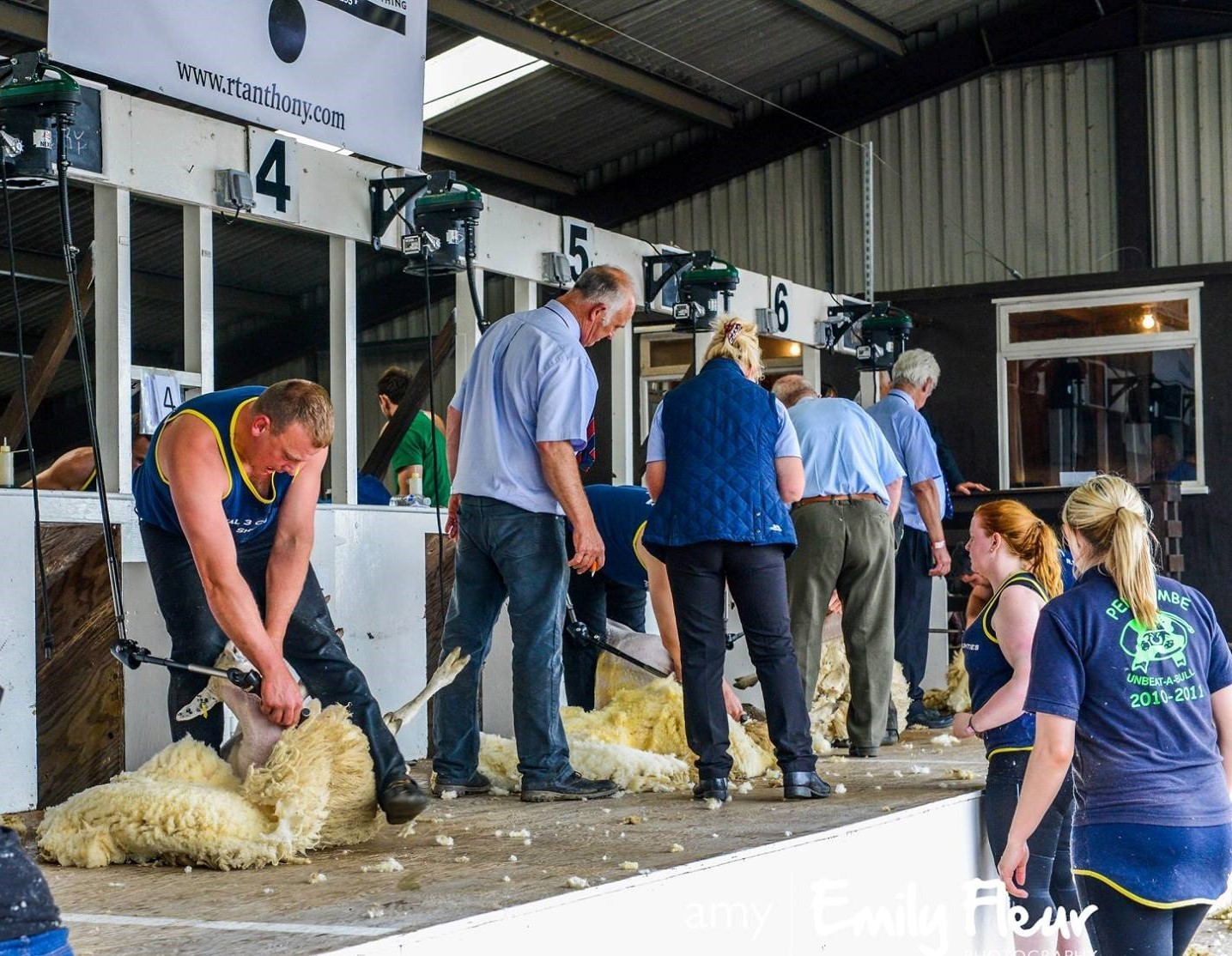 Clean work is always evident in sheep shearing contests and that's the way the industry should be at all times