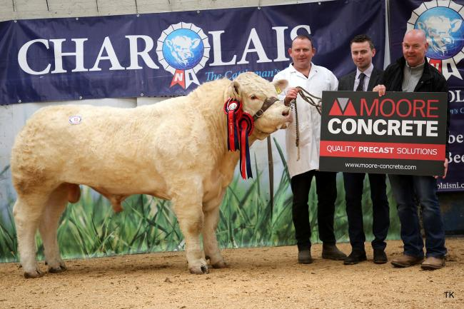 Fynmore Olaf, the overall champion made 3000gns