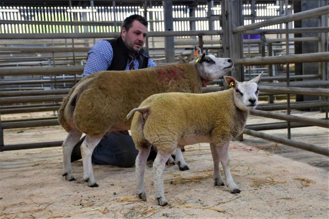 Ali Jackson's Tiptop ewe and lamb made 1150gns