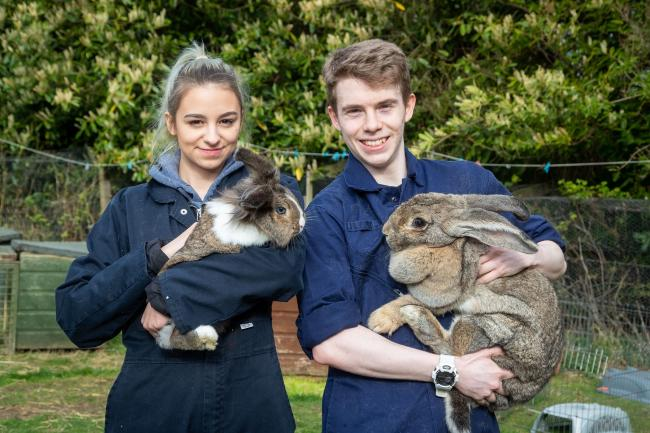 SRUC animal care students Aiden Forrest and Joanna Kramarz with Thumper and Sebastian